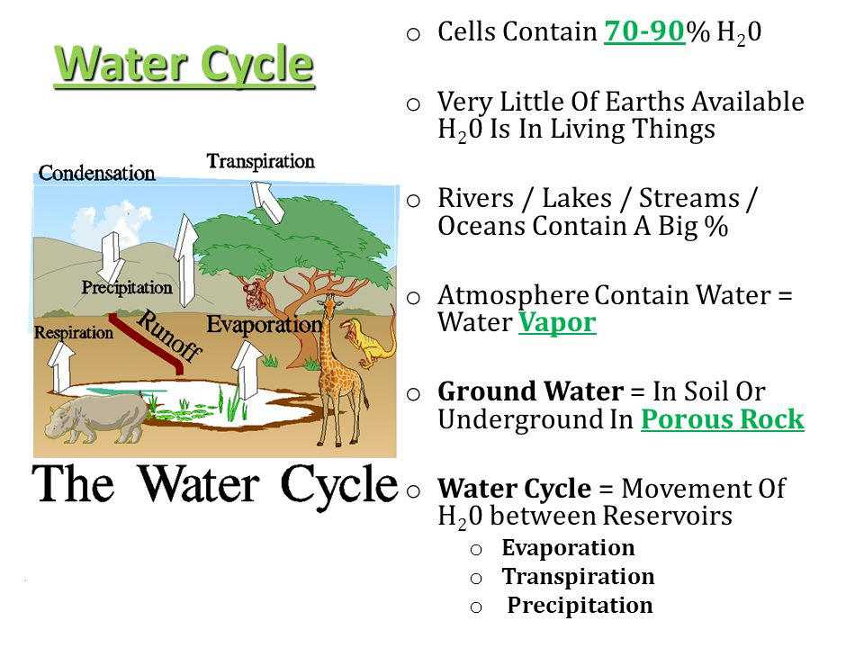 Water Cycle Cells Contain 70-90% H20