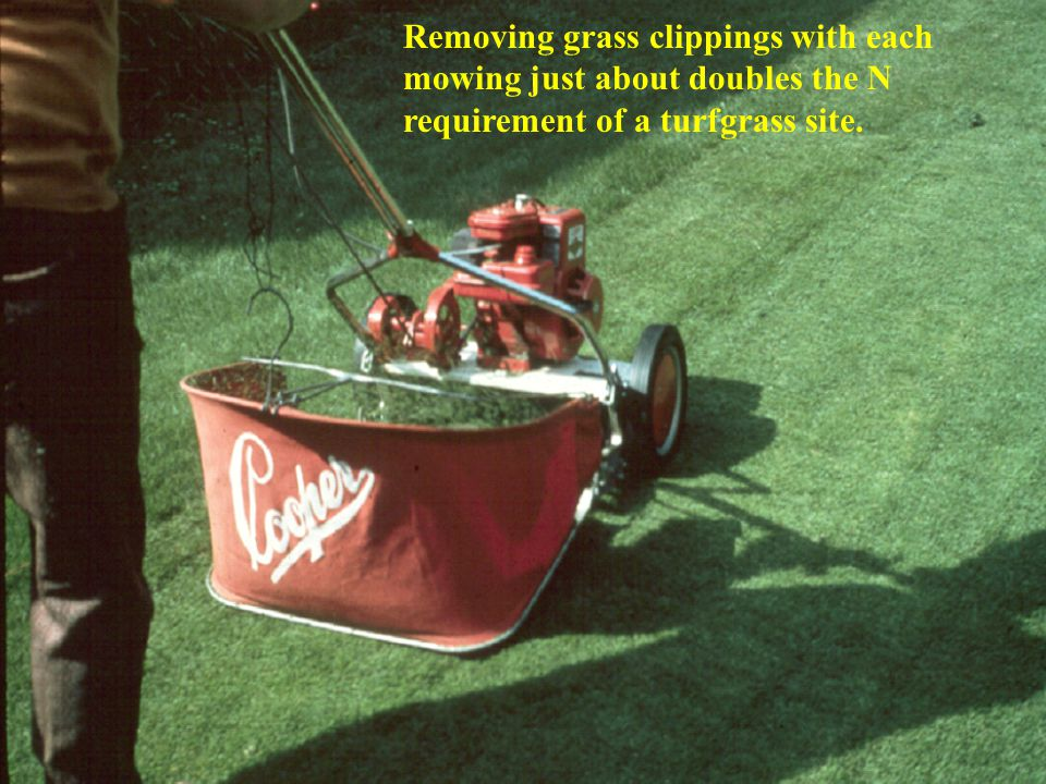 Removing grass clippings with each mowing just about doubles the N requirement of a turfgrass site.