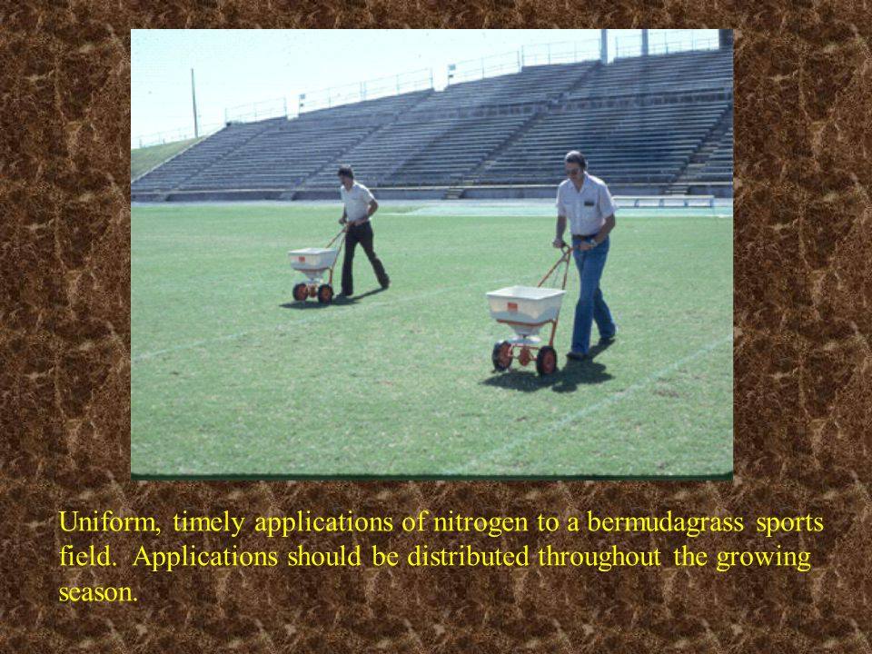 Uniform, timely applications of nitrogen to a bermudagrass sports field. Applications should be distributed throughout the growing season.