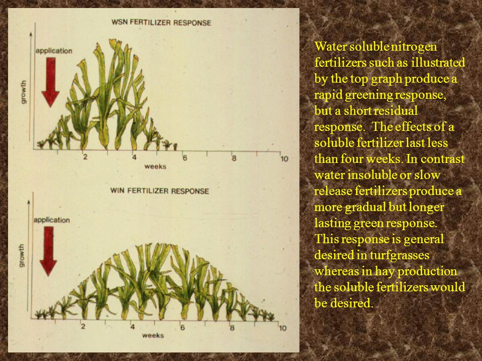 Water soluble nitrogen fertilizers such as illustrated by the top graph produce a rapid greening response, but a short residual response. The effects of a soluble fertilizer last less than four weeks. In contrast water insoluble or slow release fertilizers produce a more gradual but longer lasting green response. This response is general desired in turfgrasses whereas in hay production the soluble fertilizers would be desired.
