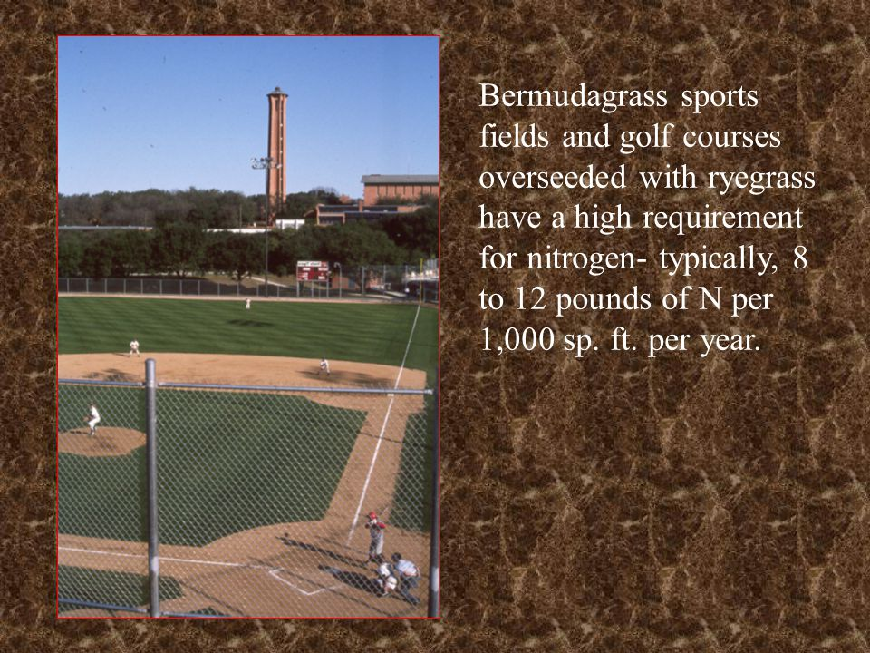 Bermudagrass sports fields and golf courses overseeded with ryegrass have a high requirement for nitrogen- typically, 8 to 12 pounds of N per 1,000 sp. ft. per year.
