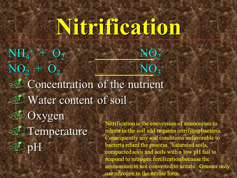 Nitrification NH4+ + O2 NO2- NO2 + O2 NO3-