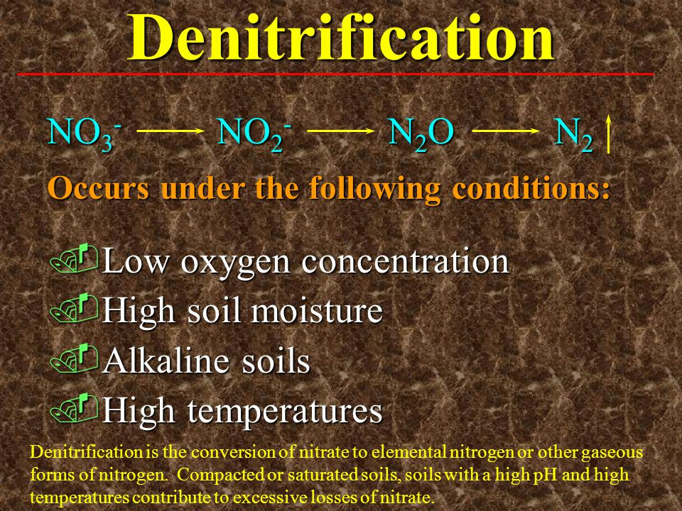Denitrification NO3- NO2- N2O N2 Low oxygen concentration