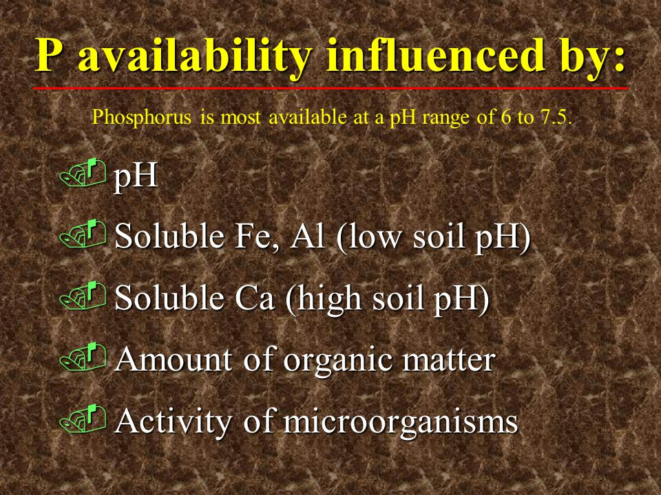 P availability influenced by: