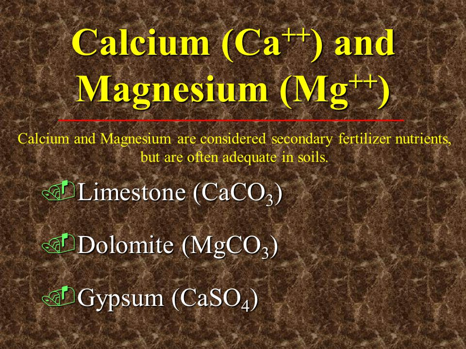 Calcium (Ca++) and Magnesium (Mg++)
