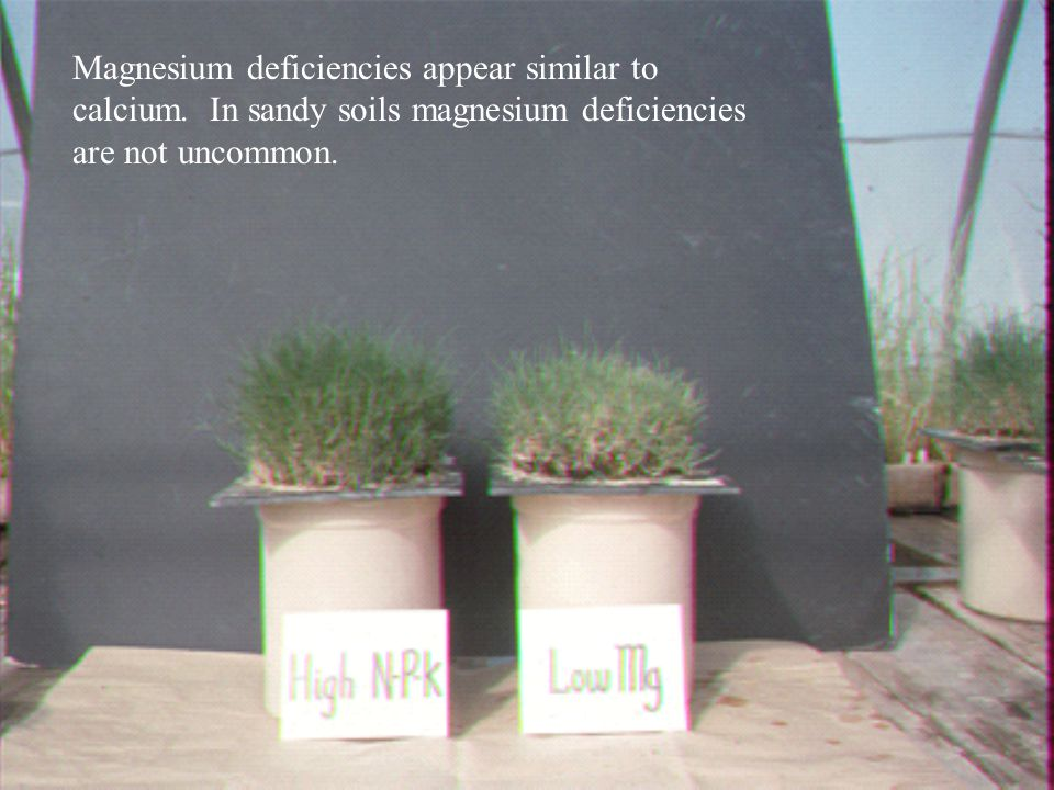 Magnesium deficiencies appear similar to calcium