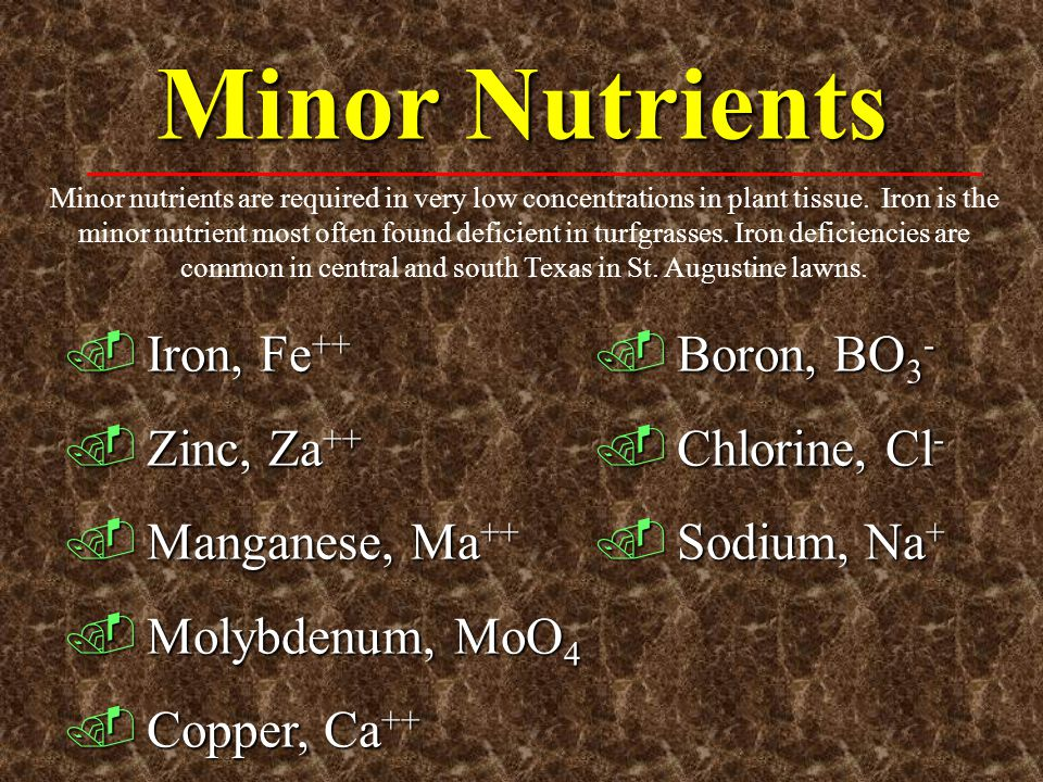 Minor Nutrients Iron, Fe++ Zinc, Za++ Manganese, Ma++ Molybdenum, MoO4