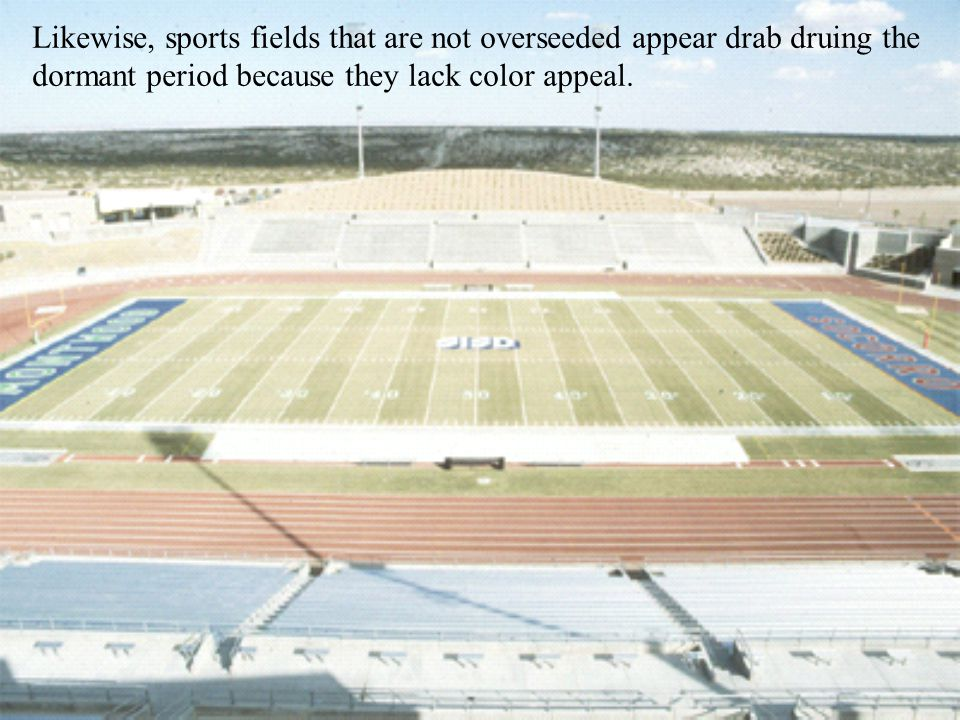 Likewise, sports fields that are not overseeded appear drab druing the dormant period because they lack color appeal.