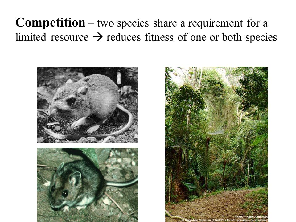 Competition – two species share a requirement for a