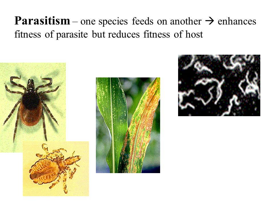 Parasitism – one species feeds on another  enhances