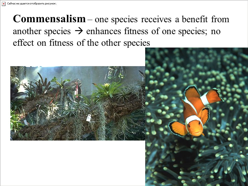 Commensalism – one species receives a benefit from