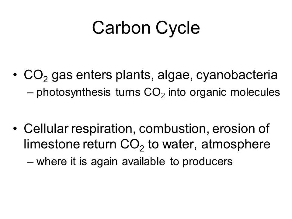Carbon Cycle CO2 gas enters plants, algae, cyanobacteria