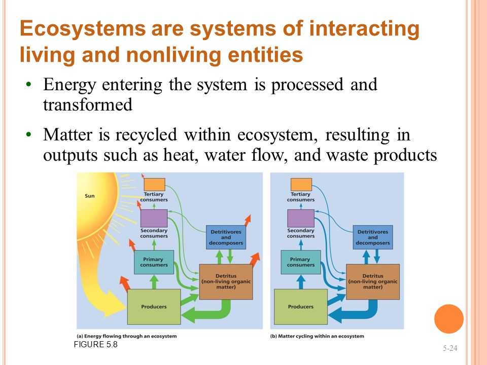 Ecosystems are systems of interacting living and nonliving entities