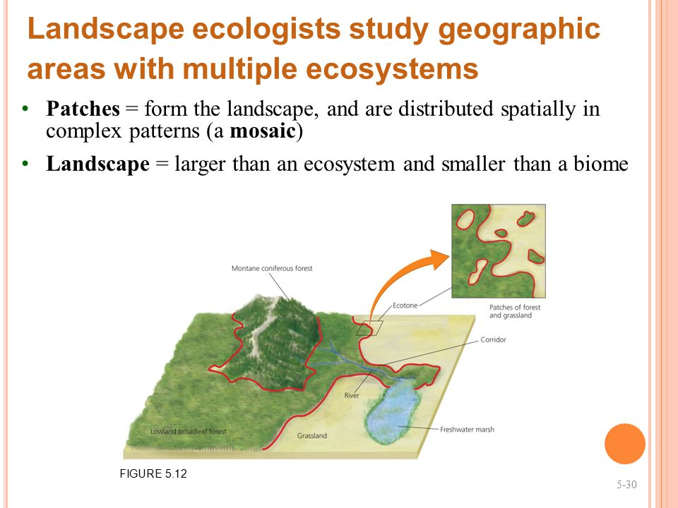 Landscape ecologists study geographic areas with multiple ecosystems