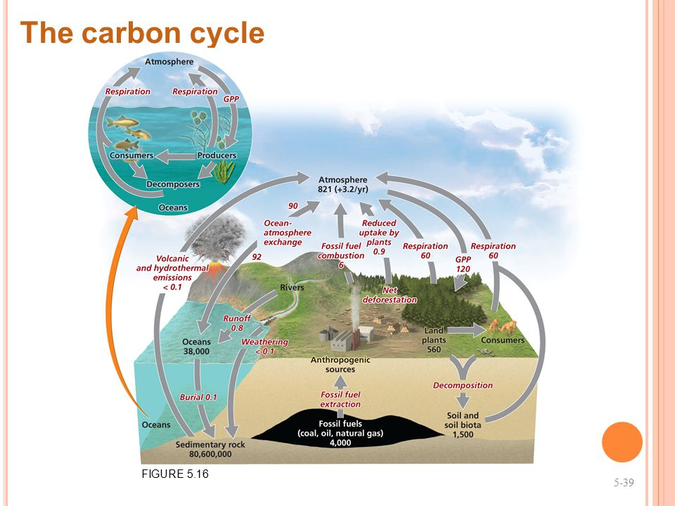 The carbon cycle FIGURE 5.16 5-39