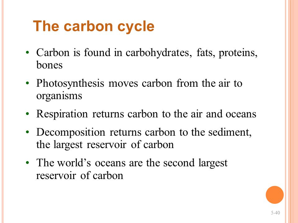 The carbon cycle Carbon is found in carbohydrates, fats, proteins, bones. Photosynthesis moves carbon from the air to organisms.