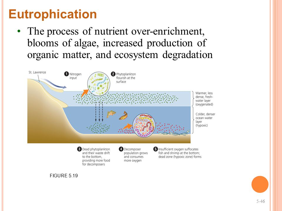 Eutrophication The process of nutrient over-enrichment, blooms of algae, increased production of organic matter, and ecosystem degradation.