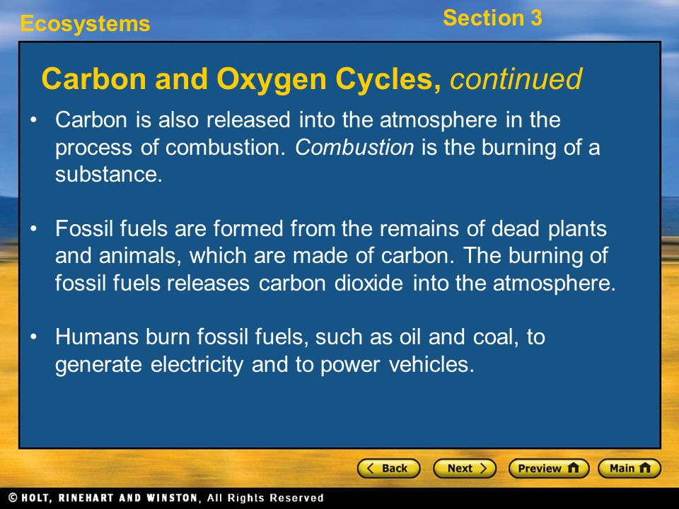 Carbon and Oxygen Cycles, continued