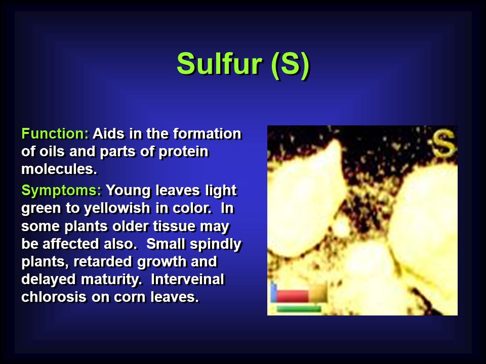 Sulfur (S) Function: Aids in the formation of oils and parts of protein molecules.