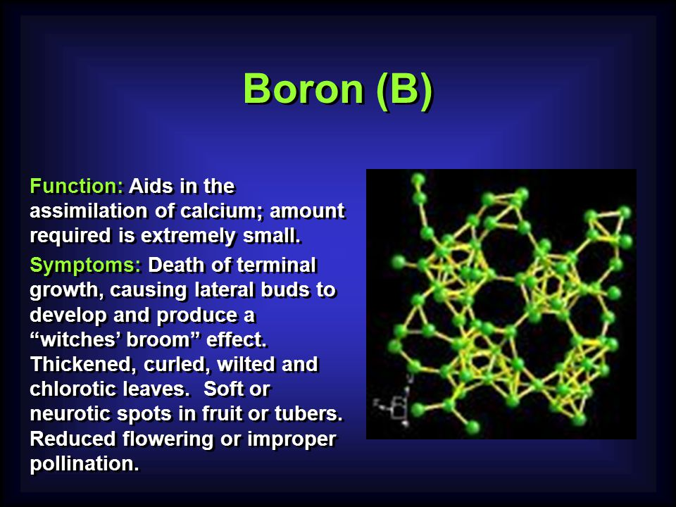 Boron (B) Function: Aids in the assimilation of calcium; amount required is extremely small.