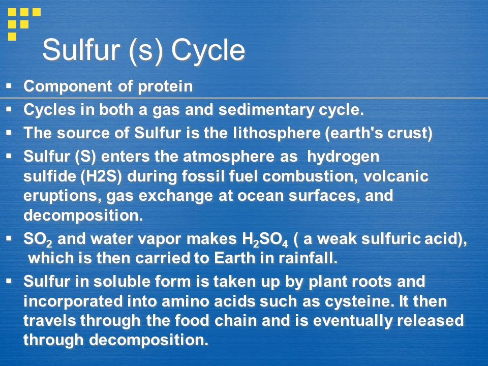 Sulfur (s) Cycle Component of protein