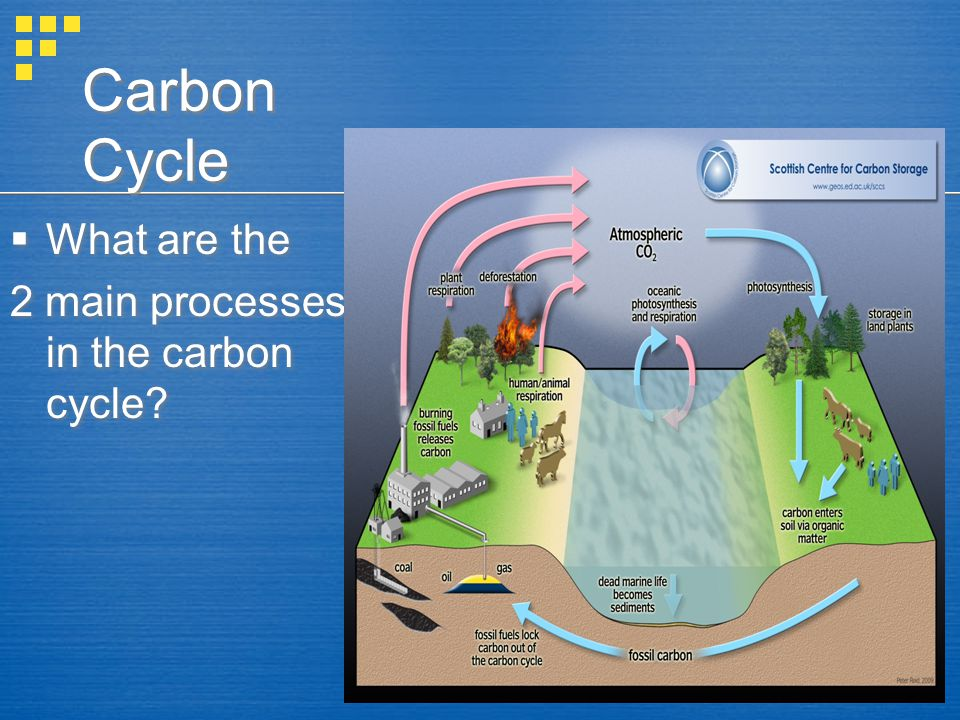 Carbon Cycle What are the 2 main processes in the carbon cycle