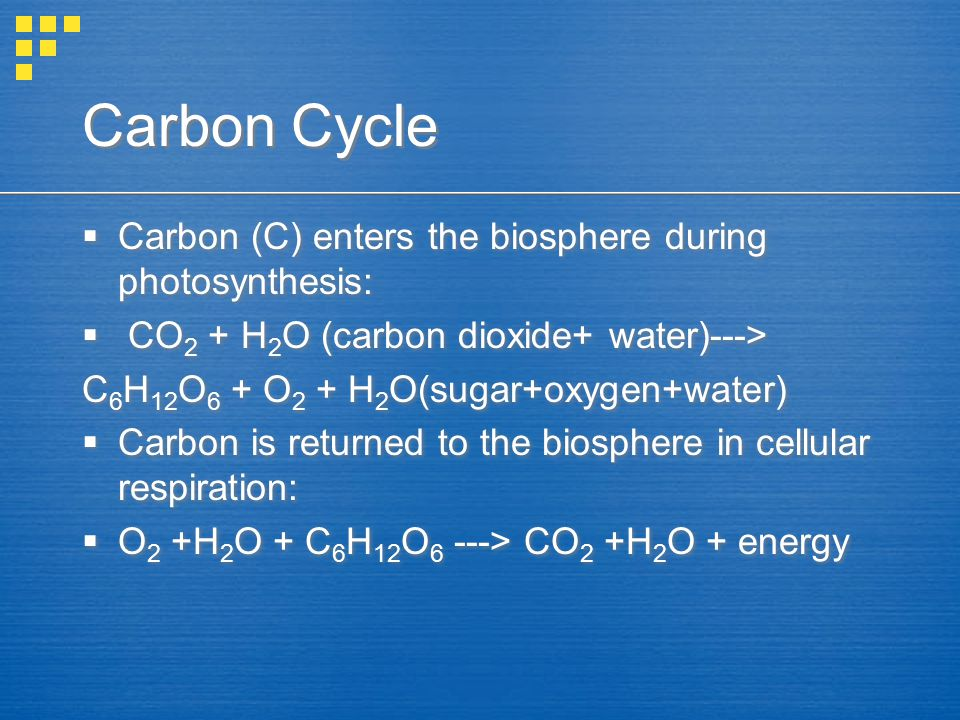 Carbon Cycle Carbon (C) enters the biosphere during photosynthesis: