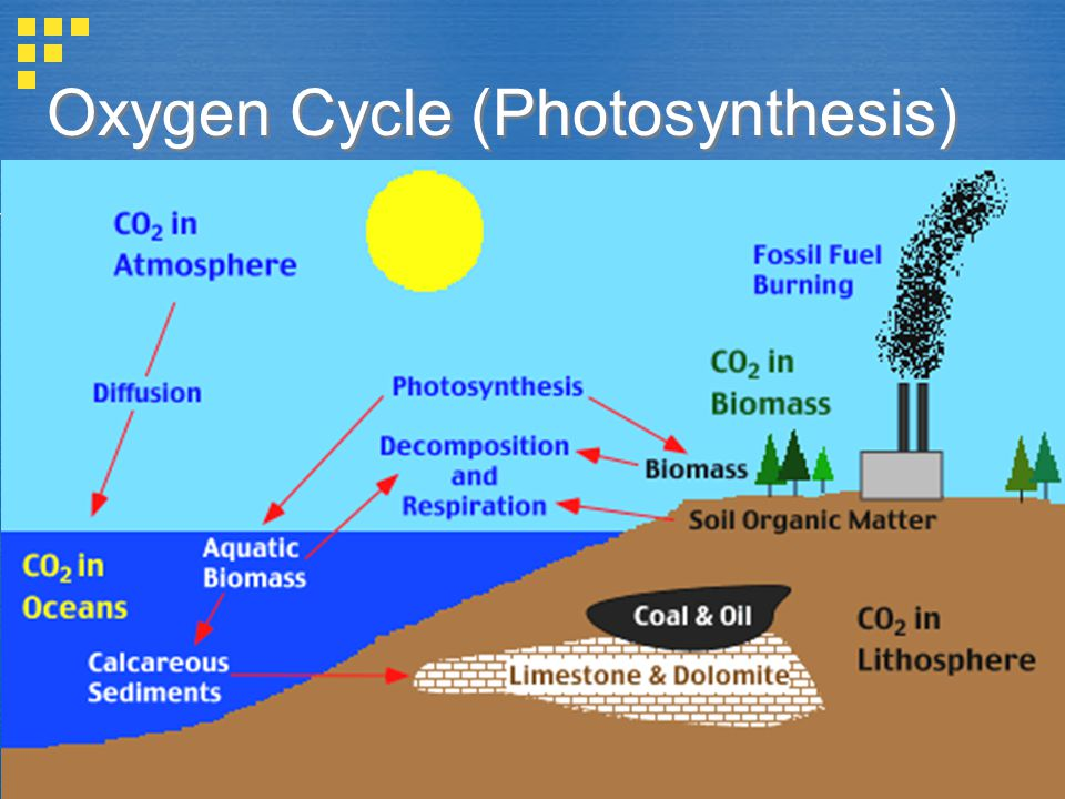 Oxygen Cycle In Nature Oxygen Cycle Images - ...