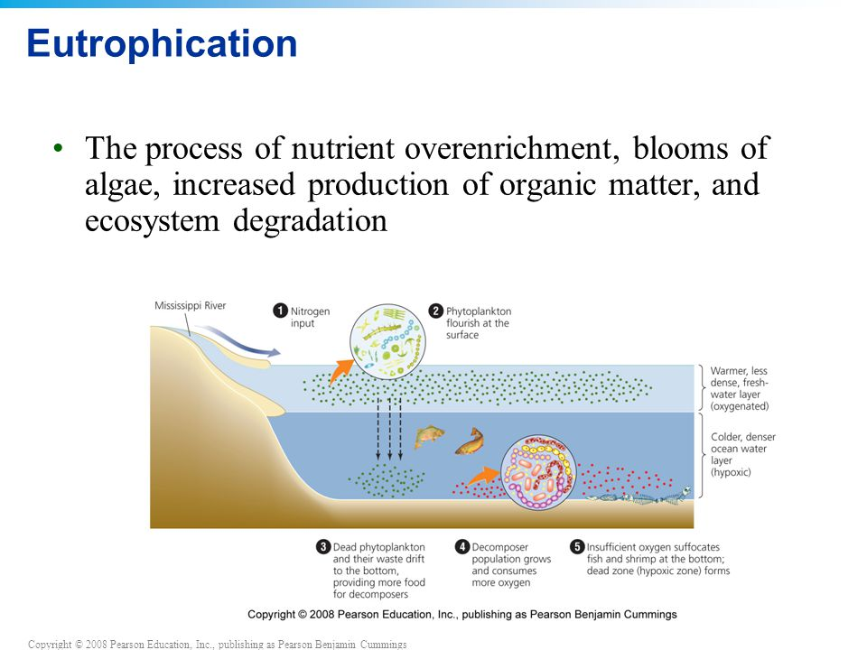 Eutrophication The process of nutrient overenrichment, blooms of algae, increased production of organic matter, and ecosystem degradation.
