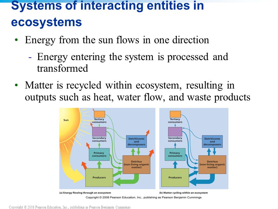 Systems of interacting entities in ecosystems