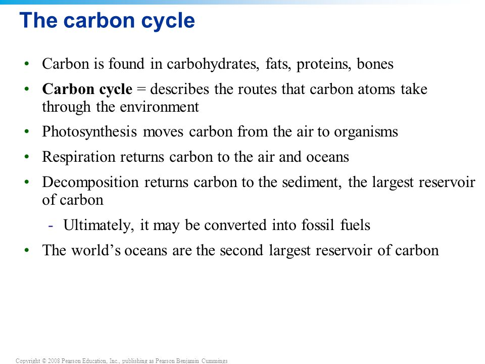 The carbon cycle Carbon is found in carbohydrates, fats, proteins, bones.