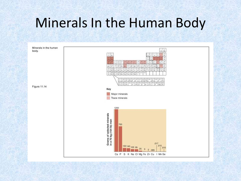 Minerals In the Human Body