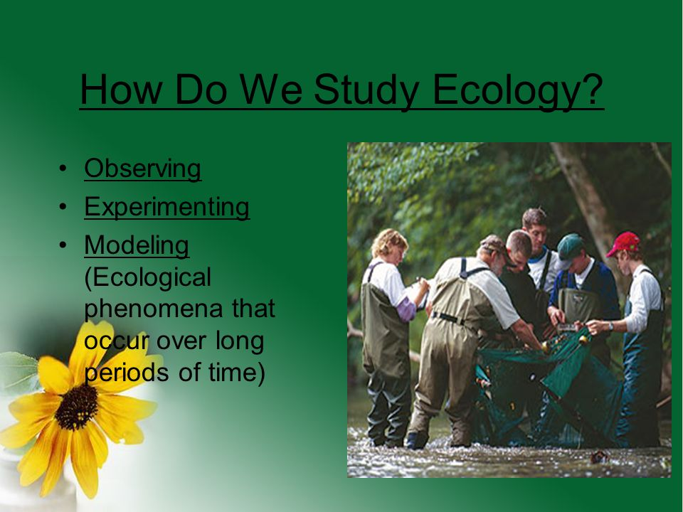 How Do We Study Ecology Observing Experimenting
