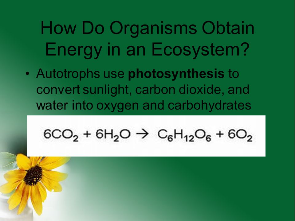 How Do Organisms Obtain Energy in an Ecosystem
