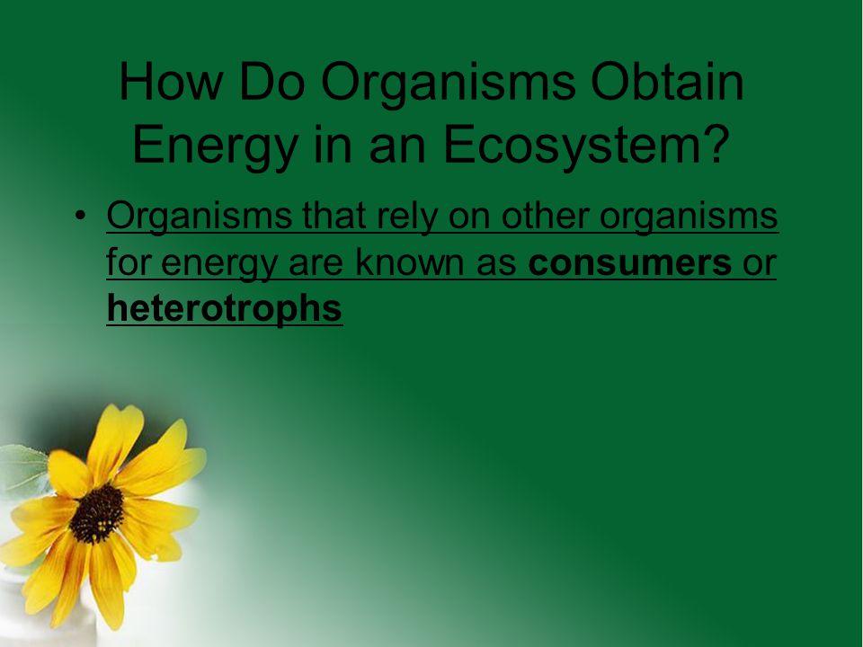 How Do Organisms Obtain Energy in an Ecosystem