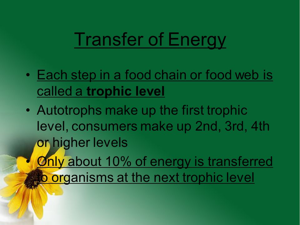 Transfer of Energy Each step in a food chain or food web is called a trophic level.