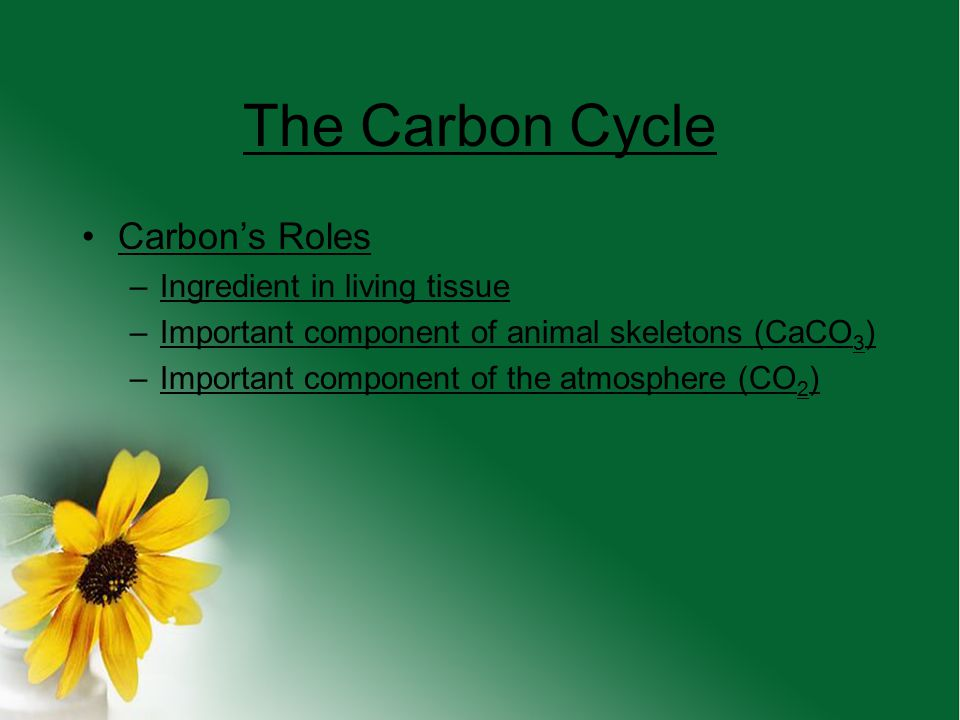 The Carbon Cycle Carbon's Roles Ingredient in living tissue