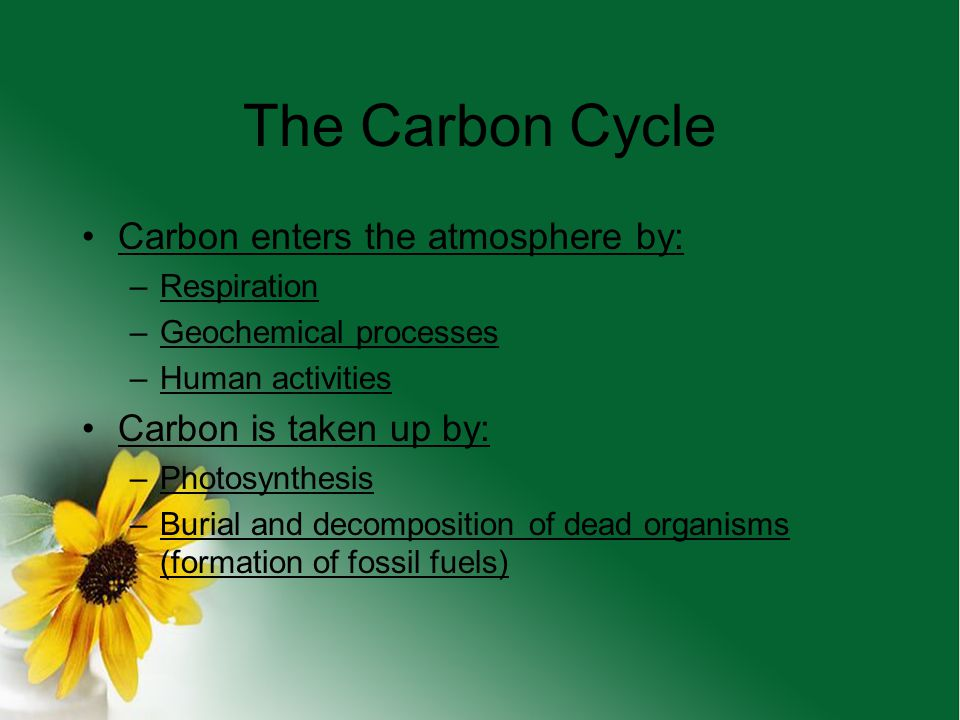 The Carbon Cycle Carbon enters the atmosphere by: