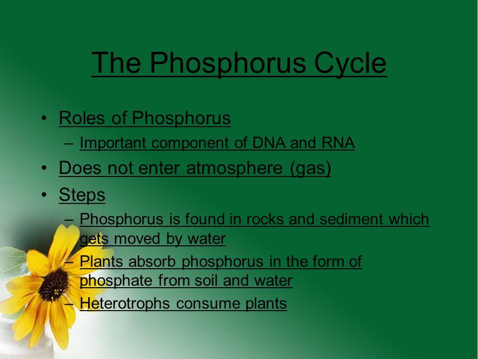 The Phosphorus Cycle Roles of Phosphorus