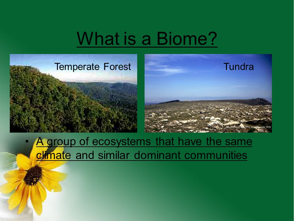 What is a Biome. Temperate Forest. Tundra.