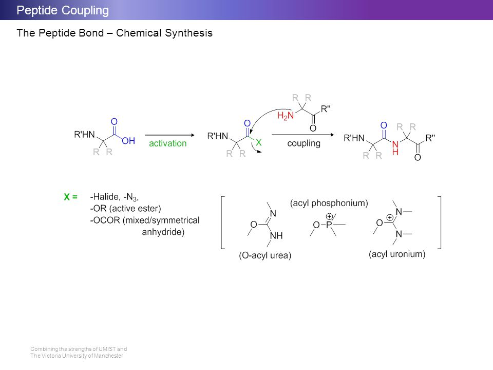 Peptide Coupling The Peptide Bond – Chemical Synthesis
