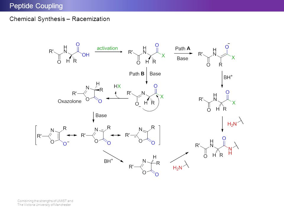 Peptide Coupling Chemical Synthesis – Racemization