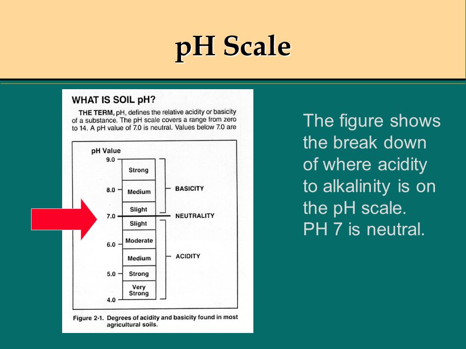 pH Scale The figure shows the break down of where acidity to alkalinity is on the pH scale. PH 7 is neutral.