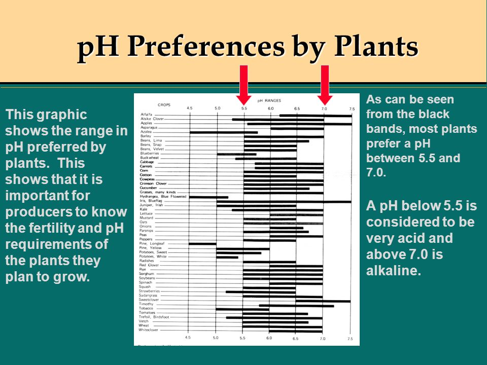 pH Preferences by Plants
