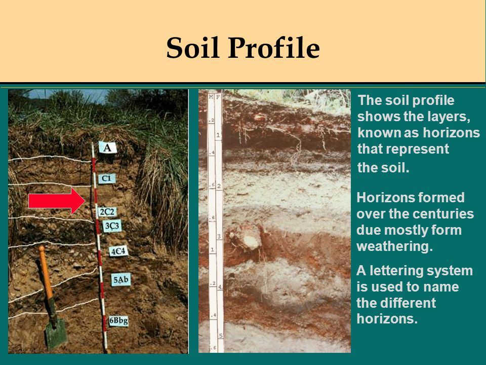 Soil Profile The soil profile shows the layers, known as horizons