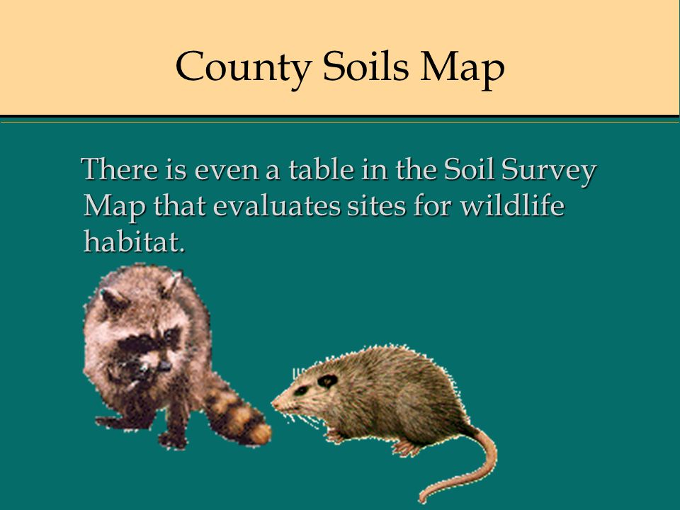 County Soils Map There is even a table in the Soil Survey Map that evaluates sites for wildlife habitat.