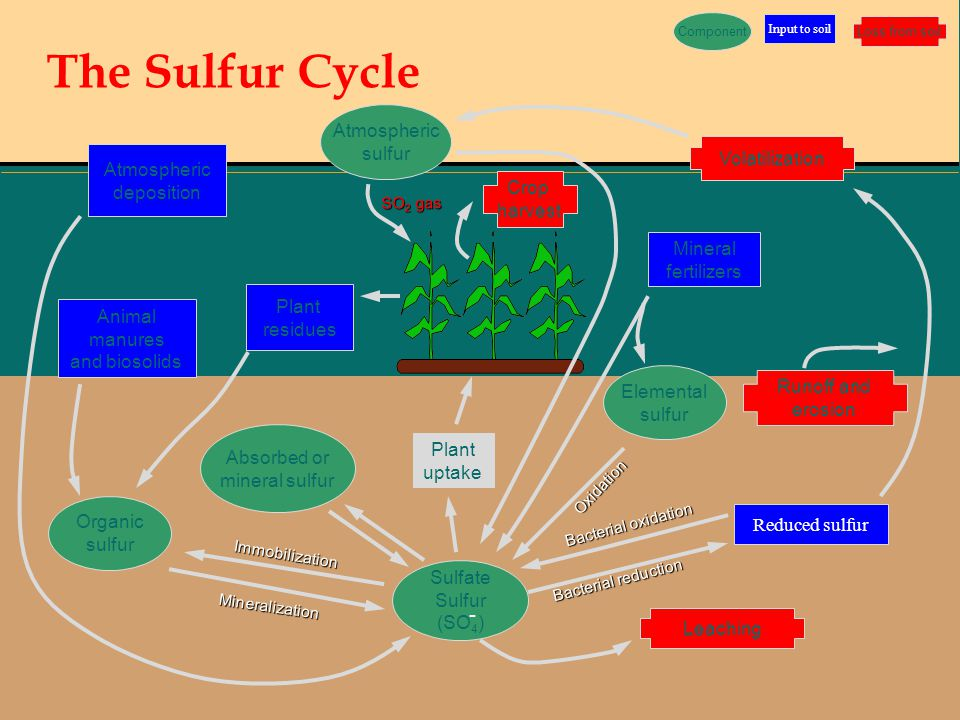 The Sulfur Cycle - Atmospheric sulfur Volatilization Atmospheric