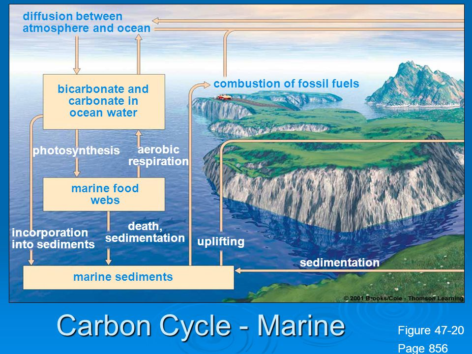 bicarbonate and carbonate in ocean water