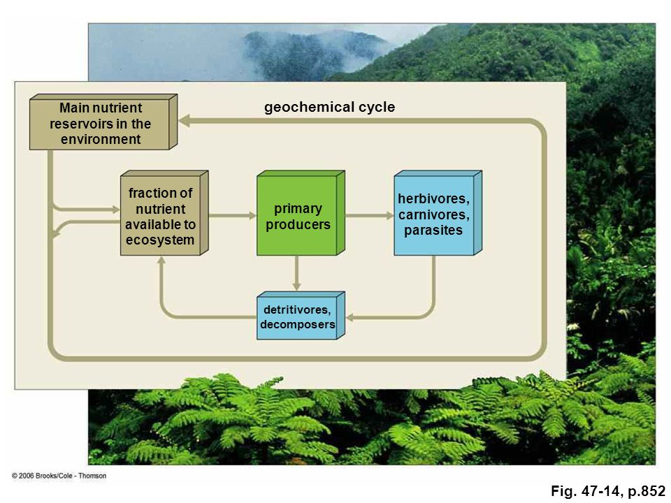 geochemical cycle Fig. 47-14, p.852