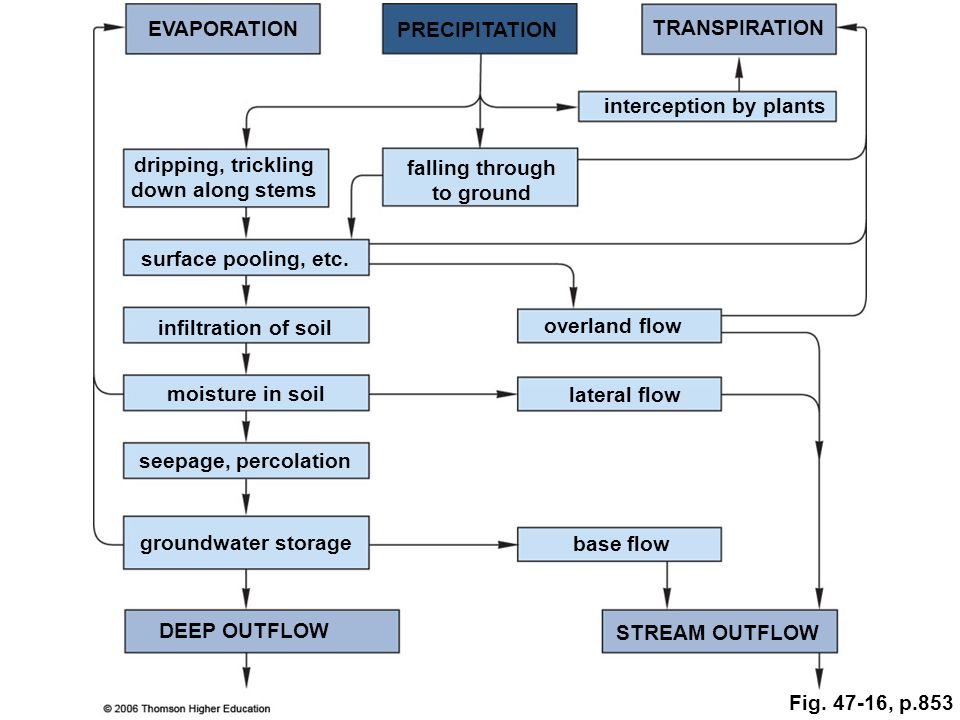 EVAPORATION PRECIPITATION. TRANSPIRATION. interception by plants. dripping, trickling. down along stems.